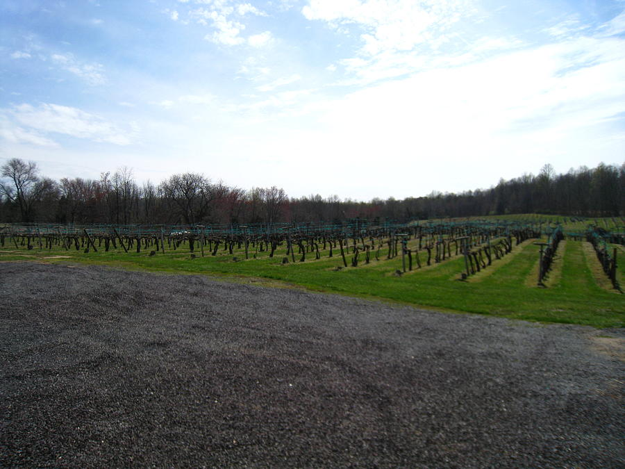 Virginia Photograph - Vineyards In Va - 121267 by DC Photographer
