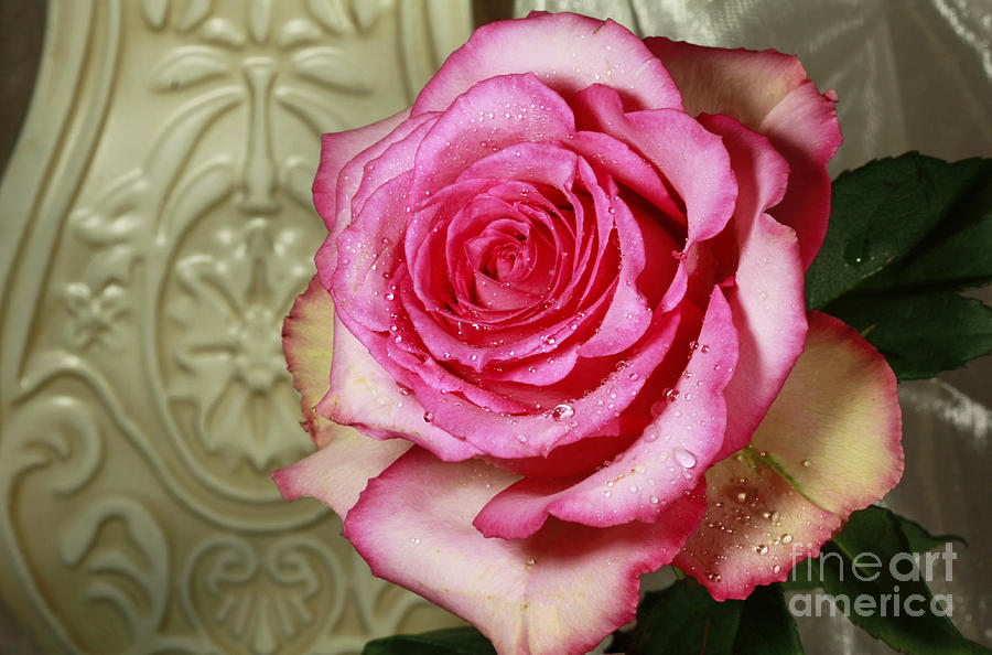 Vintage Beauty Rose Photograph - Vintage Beauty Rose by Inspired Nature Photography Fine Art Photography