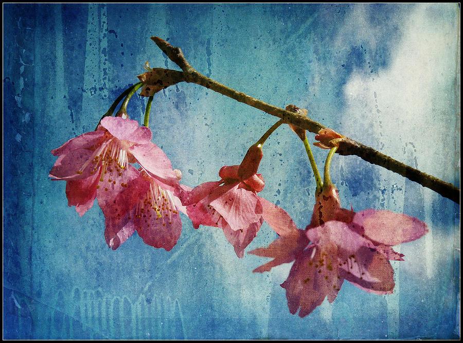 Cherry Photograph - Vintage Blossoms by Carla Parris