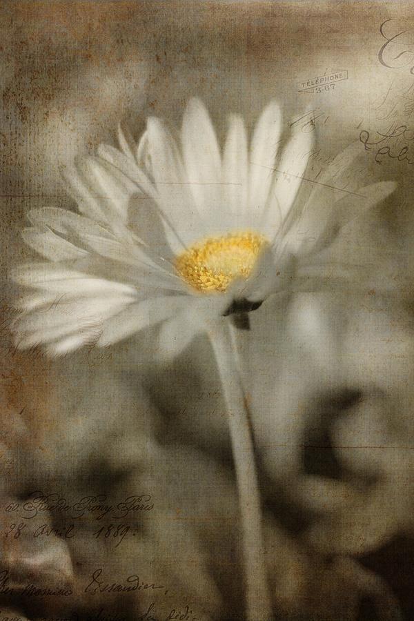 Daisy Photograph - Vintage Daisy by Joann Vitali