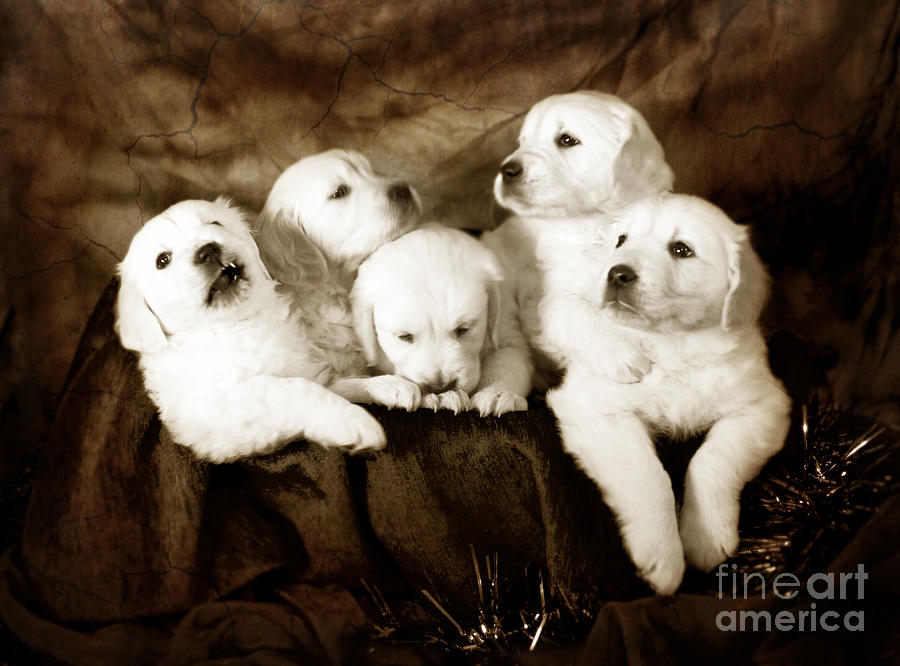 Vintage Festive Puppies Photograph  - Vintage Festive Puppies Fine Art Print