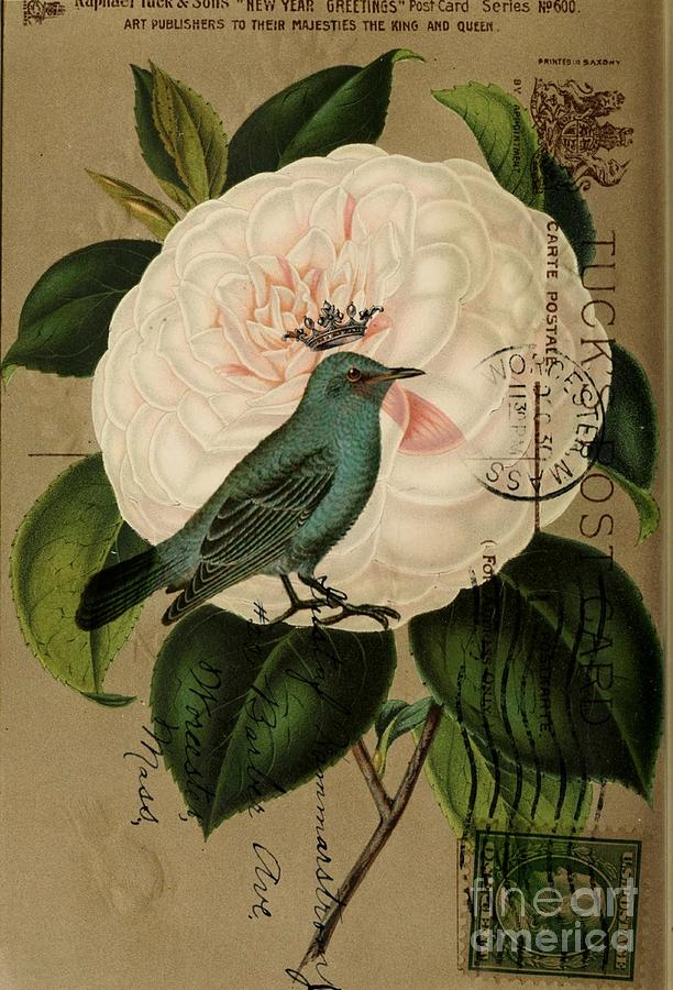 Botanical Art Drawing - Vintage French Botanical Art Pink Rose Teal Bird by Cranberry Sky