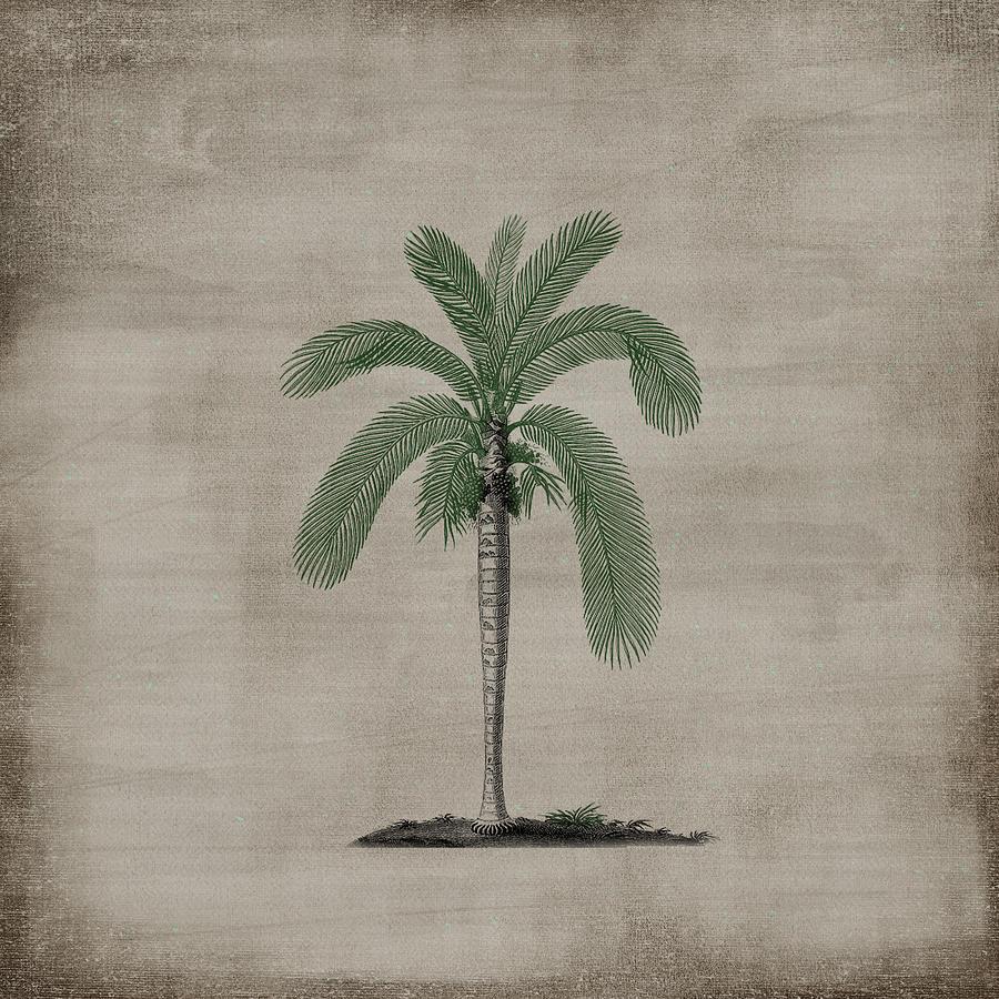 Vintage Palm 88