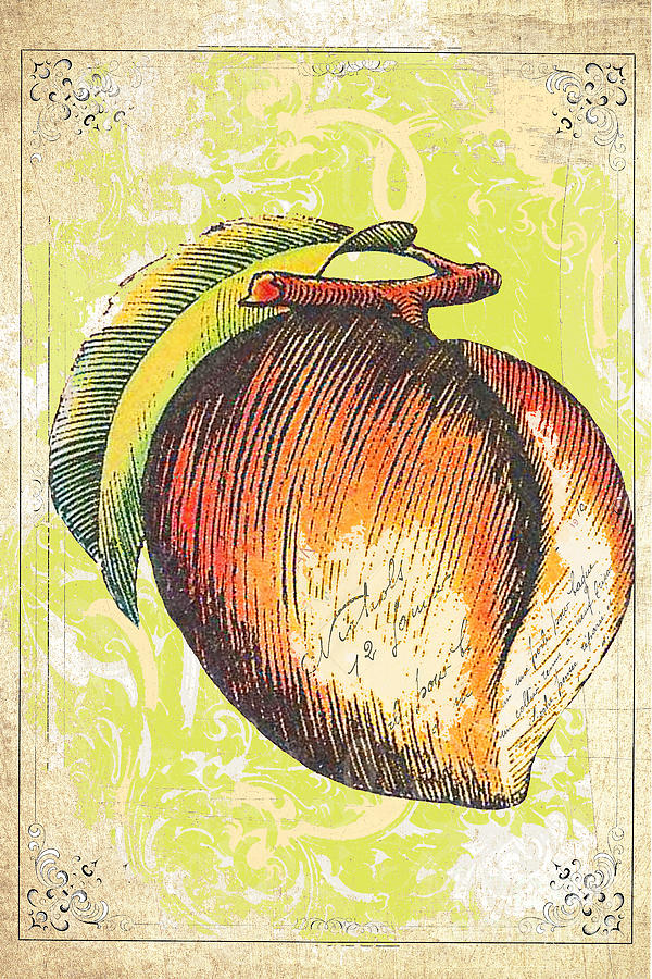 Vintage Peach Print Mixed Media  - Vintage Peach Print Fine Art Print