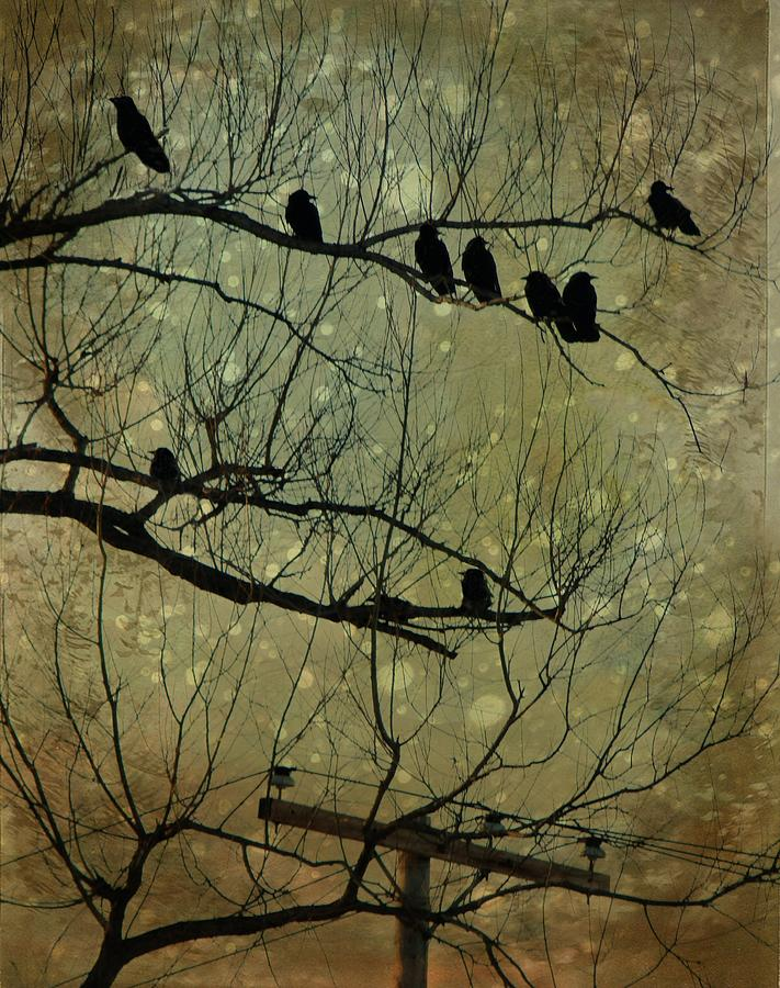 Vintage Snow And Crows Photograph  - Vintage Snow And Crows Fine Art Print