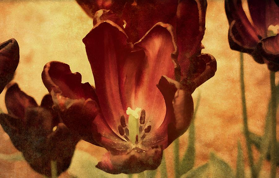 Vintage Tulips Mixed Media  - Vintage Tulips Fine Art Print