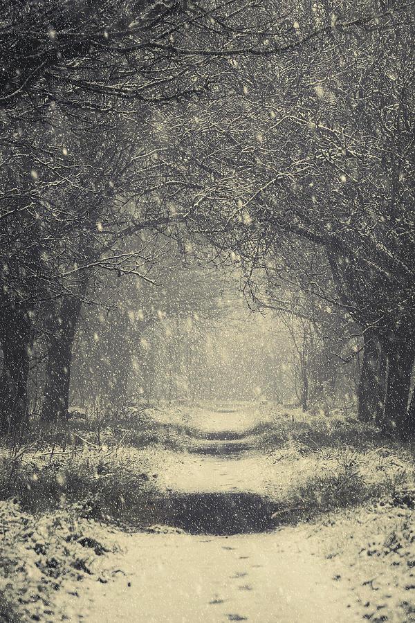 vintage winter photograph by svetlana sewell