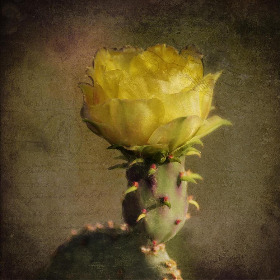 Vintage Yellow Cactus Photograph