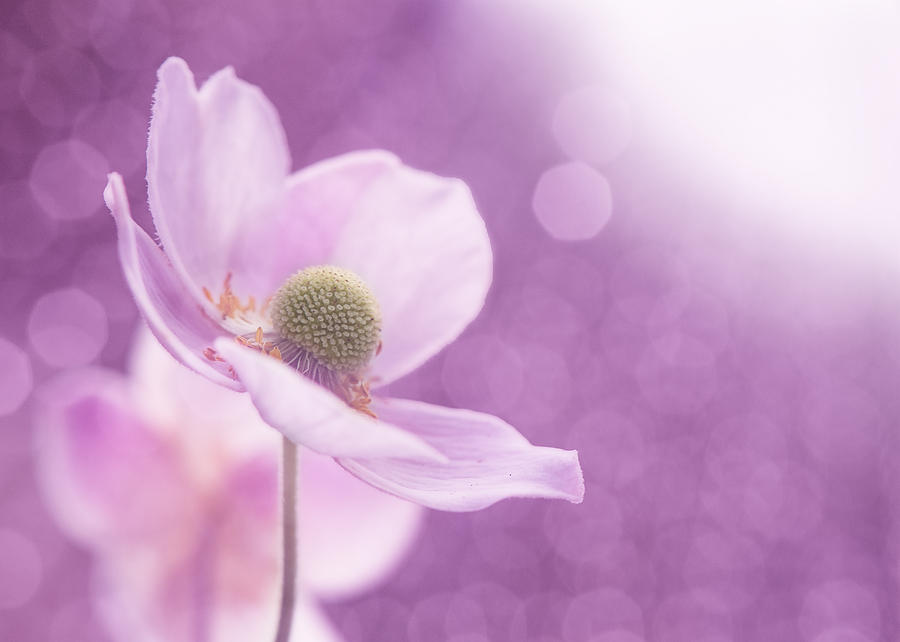 Violet Breeze Photograph  - Violet Breeze Fine Art Print