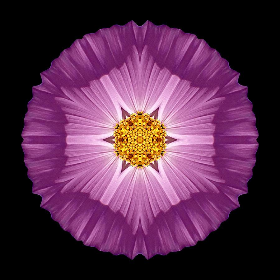 Flower Photograph - Violet Cosmos II Flower Mandala by David J Bookbinder