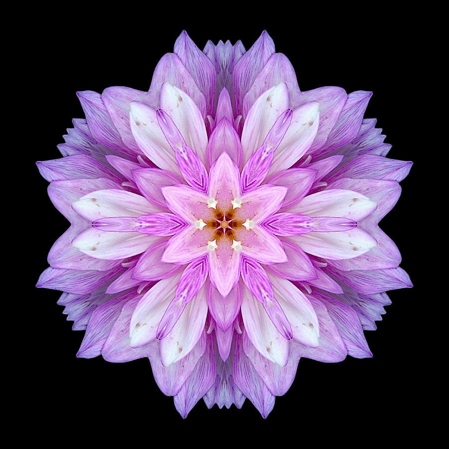 Violet Dahlia I Flower Mandala Photograph
