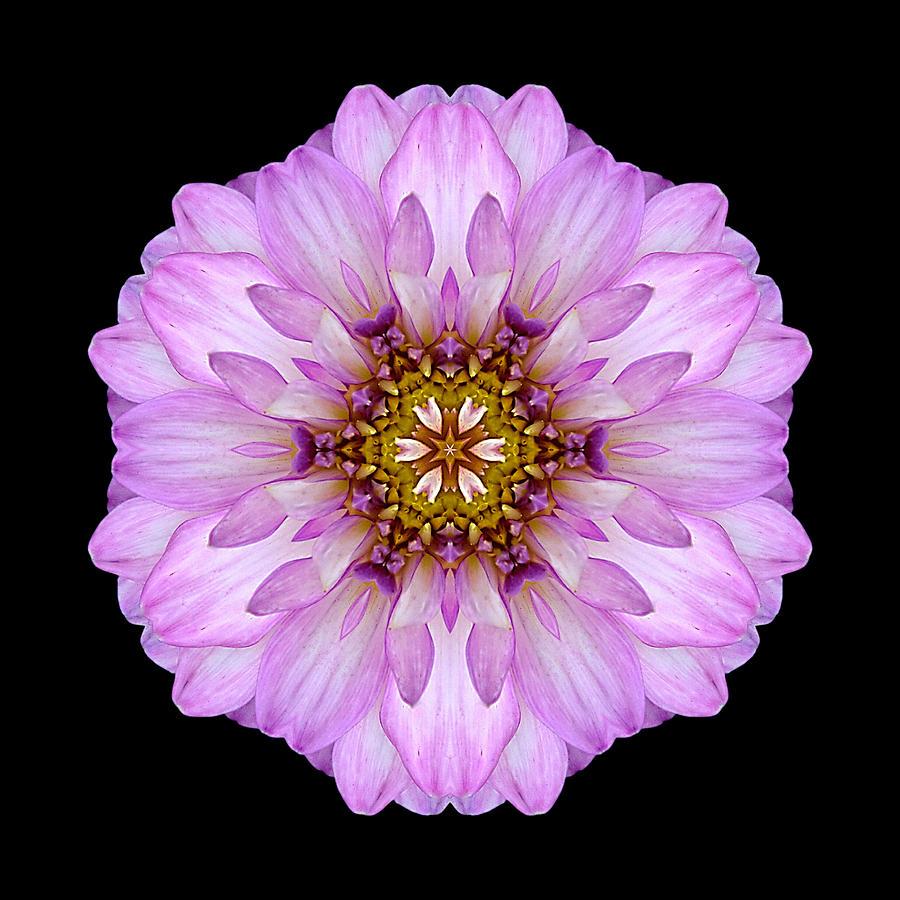 Violet Dahlia II Flower Mandala Photograph