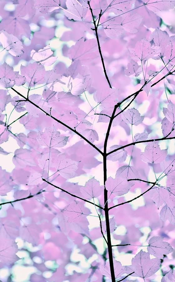 Violet Lavender Leaves Melody Photograph