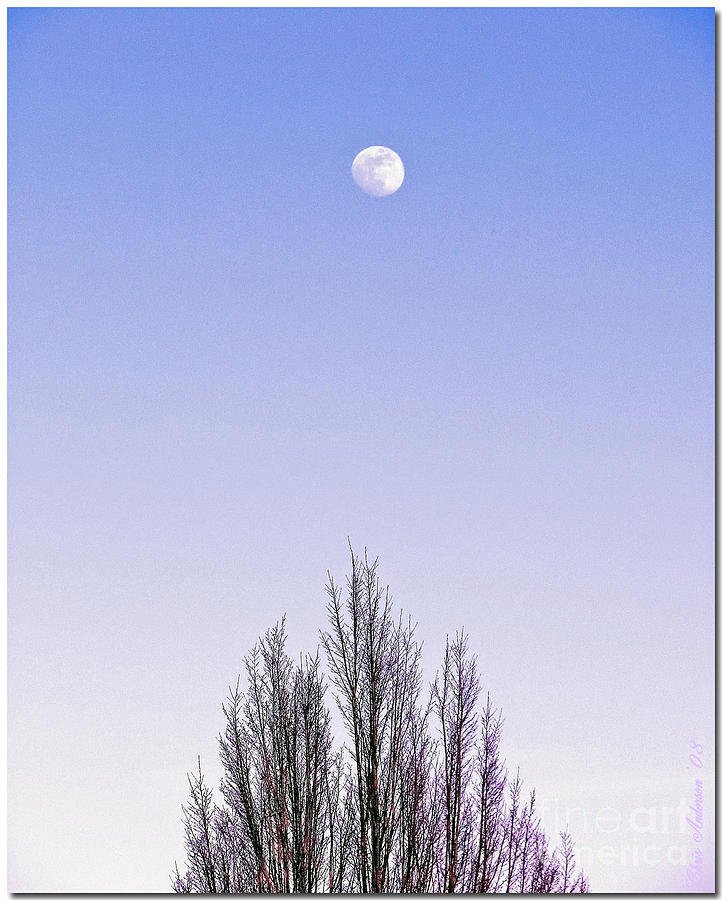 Violet Moon And Treetop Photograph  - Violet Moon And Treetop Fine Art Print