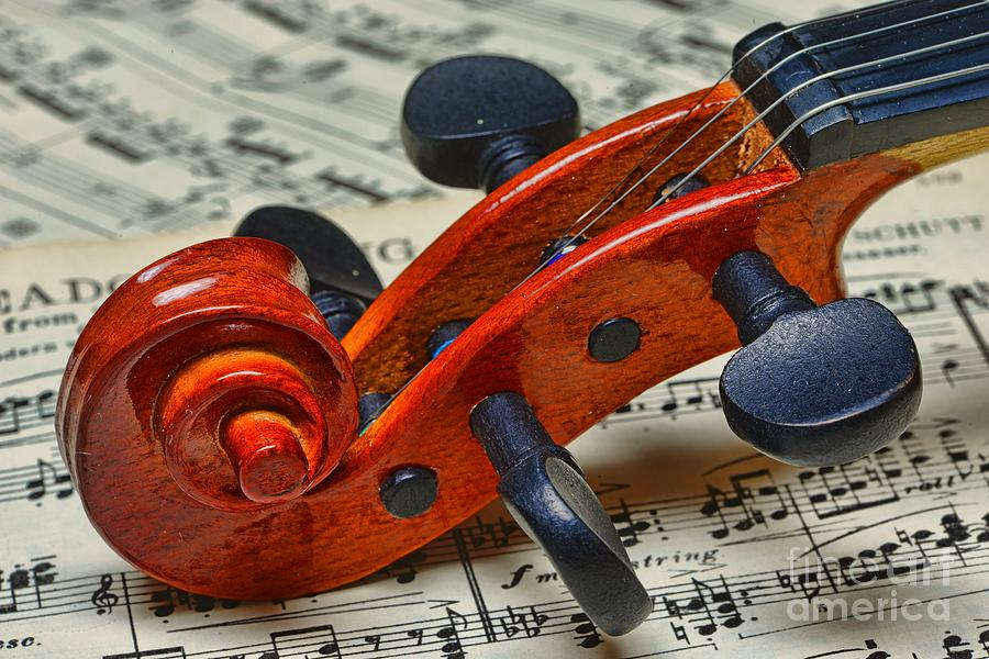 Violin Scroll Up Close Photograph