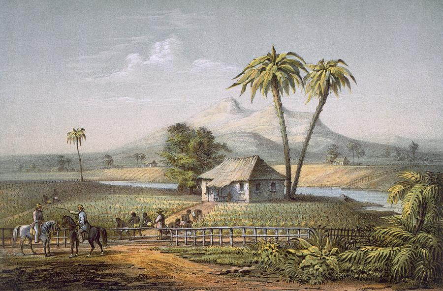 Vista De Una Vega De Tabaco, Or Drawing