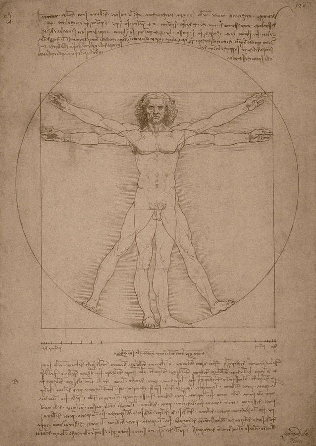 Vitruvian Man  Drawing  - Vitruvian Man  Fine Art Print
