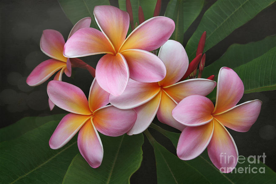 Wailua Sweet Love Photograph  - Wailua Sweet Love Fine Art Print