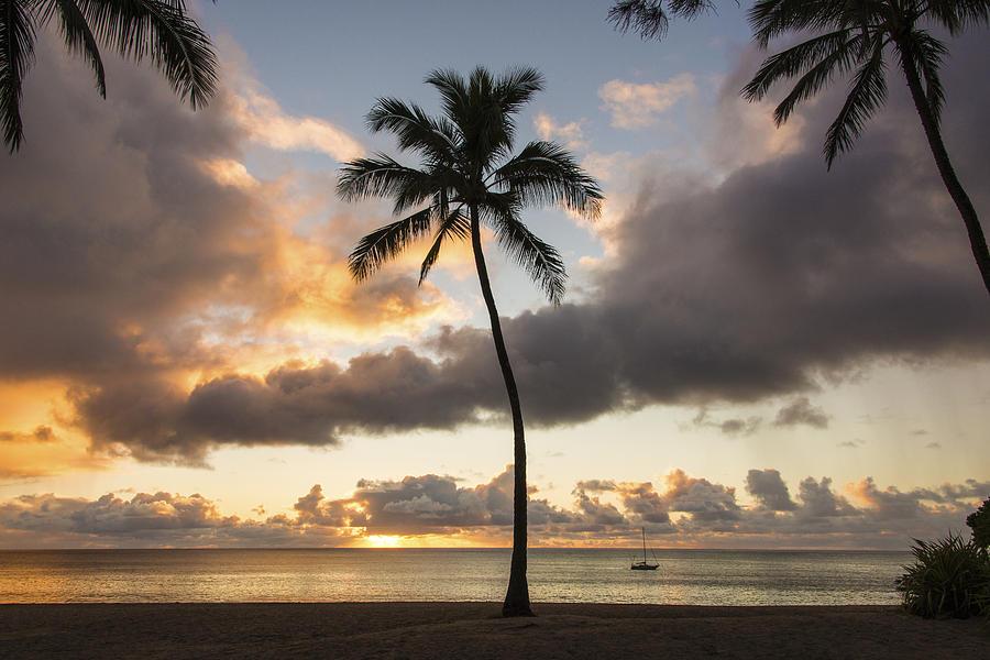 Waimea Beach Palm Tree Trees Sunset North Shore Oahu Hawaii Hi Seascape Photograph - Waimea Beach Sunset - Oahu Hawaii by Brian Harig