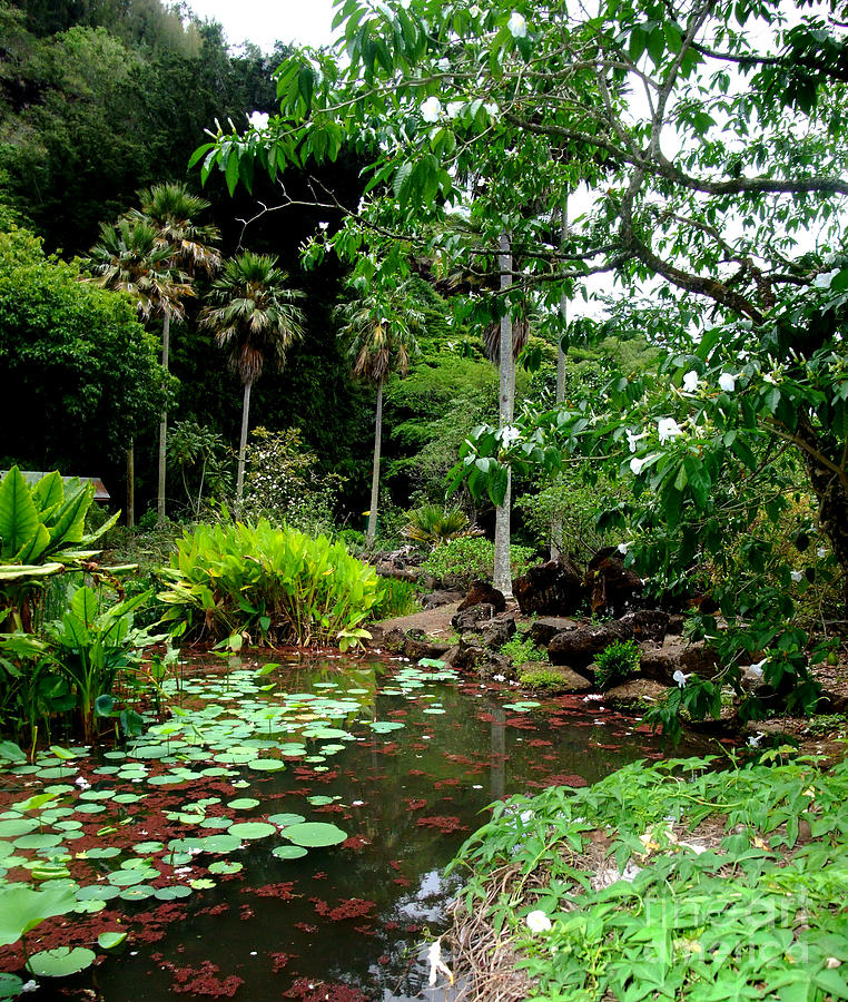 Waimea Valley In The North Shore Of Oahu Hawaii Photograph - Waimea Valley In The North Shore Of Oahu Hawaii by Jim Fitzpatrick