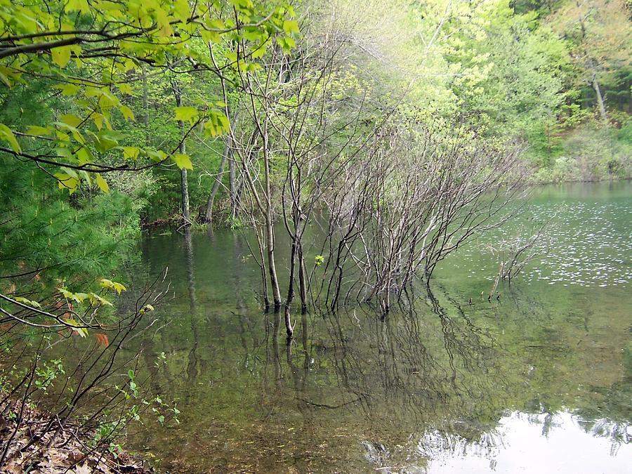 Walden Pond Photograph - Walden Pond by Catherine Gagne