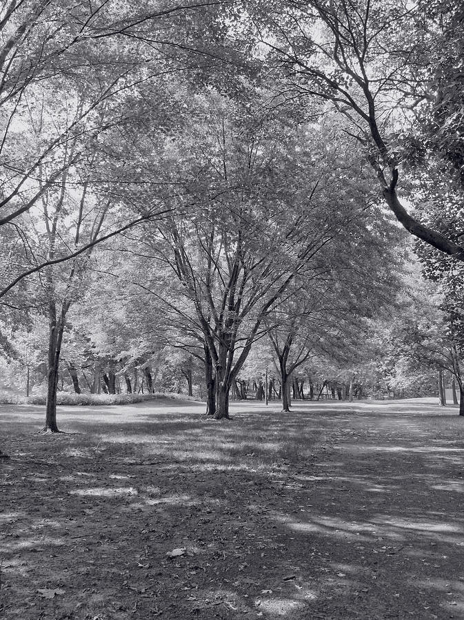 Walk In The Park Photograph