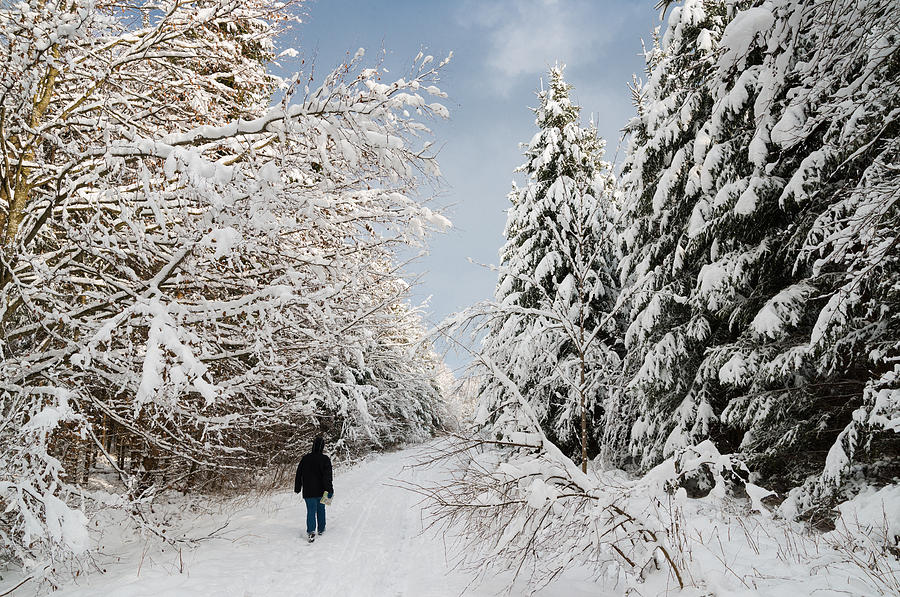 Walk In The Winterly Forest With Lots Of Snow Photograph