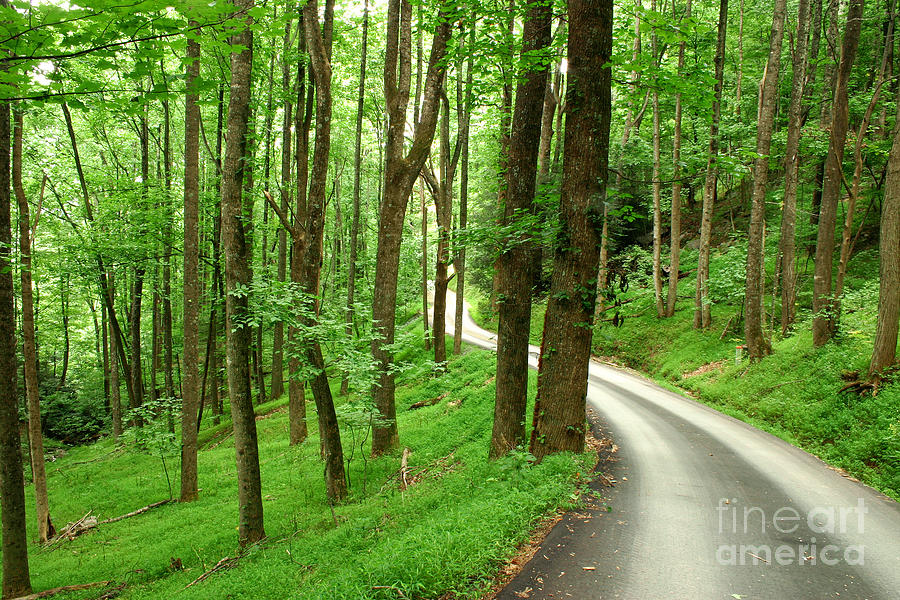 Walking On A Country Road - Appalachian Mountain Backroad Photograph