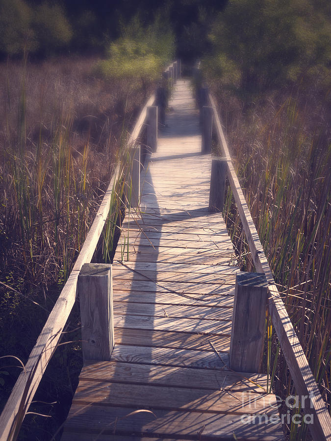Walkway Through The Reeds Appalachian Trail Photograph