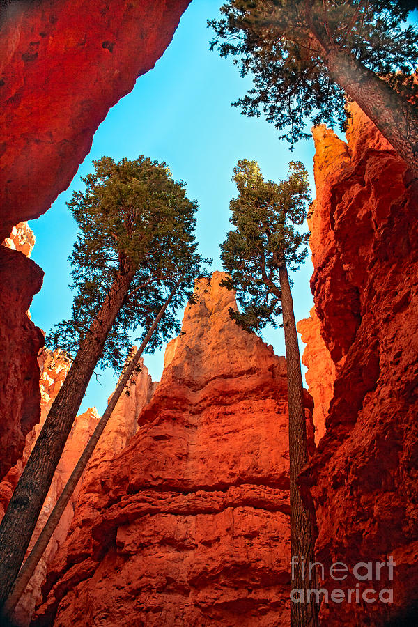 Trees Photograph - Wall Street by Robert Bales