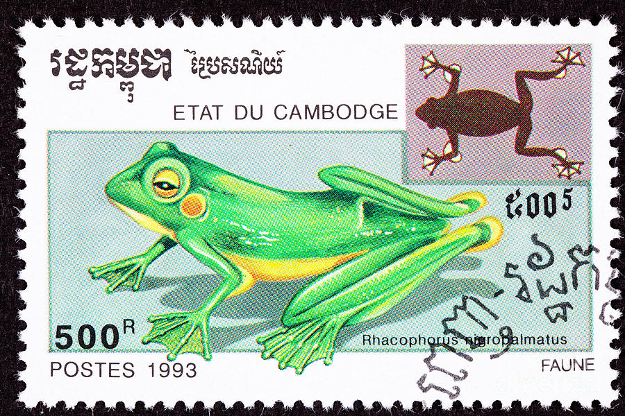Wallaces Flying Frog Photograph