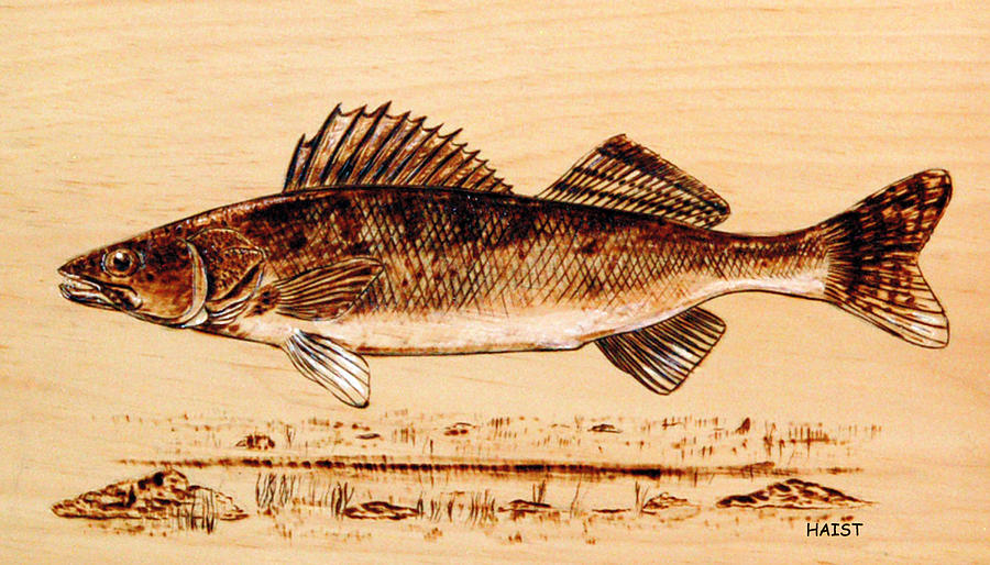 Walleye Pyrography  - Walleye Fine Art Print