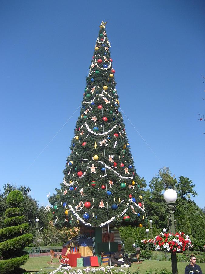 Walt Disney World Resort - Magic Kingdom - 1212132 Photograph