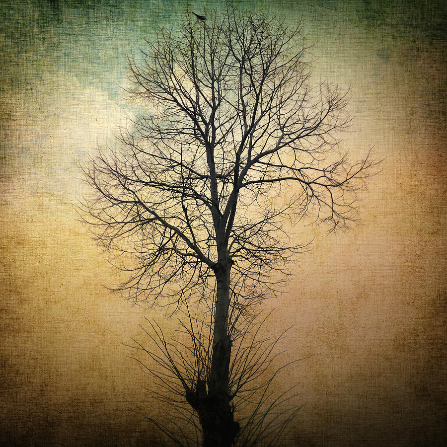 Waltz Of A Tree Photograph  - Waltz Of A Tree Fine Art Print
