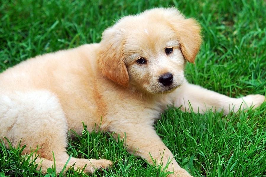 Warm Fuzzy Puppy Photograph