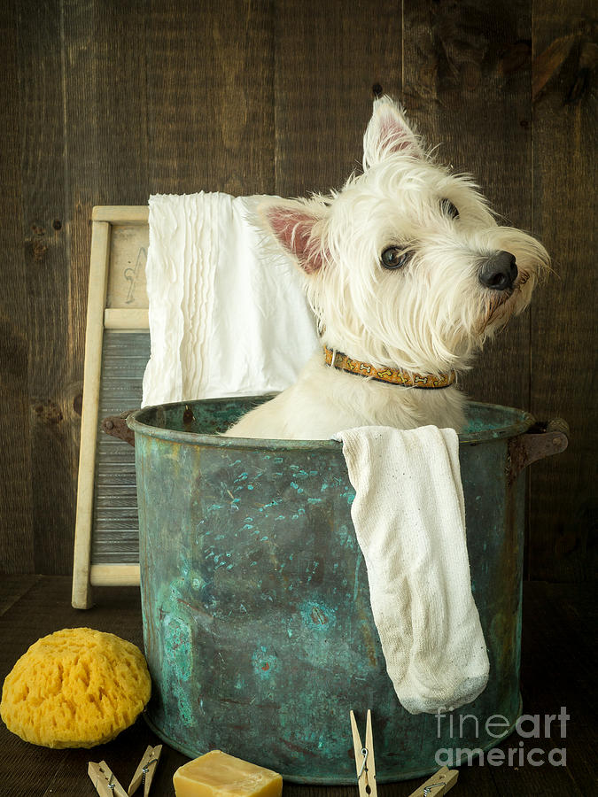 Wash Day Photograph  - Wash Day Fine Art Print