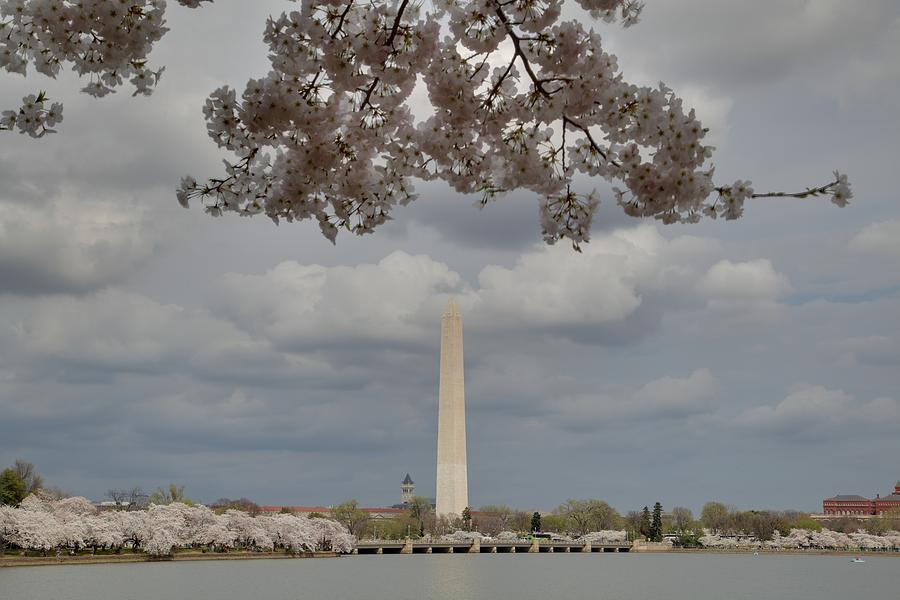 Washington Monument - Cherry Blossoms - Washington Dc - 011330 Photograph