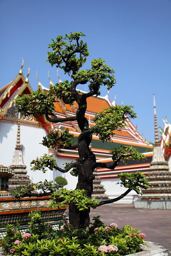 Wat Pho - Bangkok Thailand - 011323 Photograph