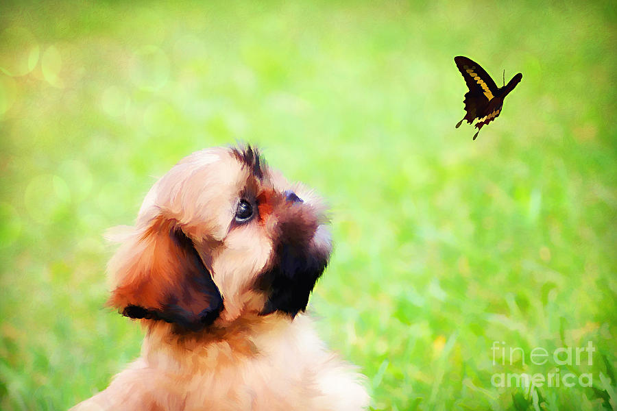 Watching Butterflies Photograph  - Watching Butterflies Fine Art Print