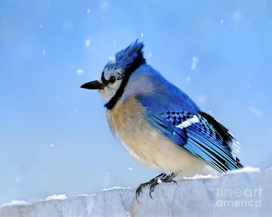 Watching The Snow Photograph  - Watching The Snow Fine Art Print