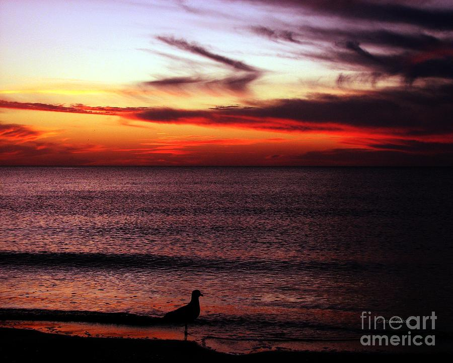 Watching The Sunset Photograph  - Watching The Sunset Fine Art Print