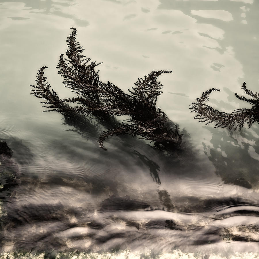 Ferns Photograph - Water Fronds by Dave Bowman
