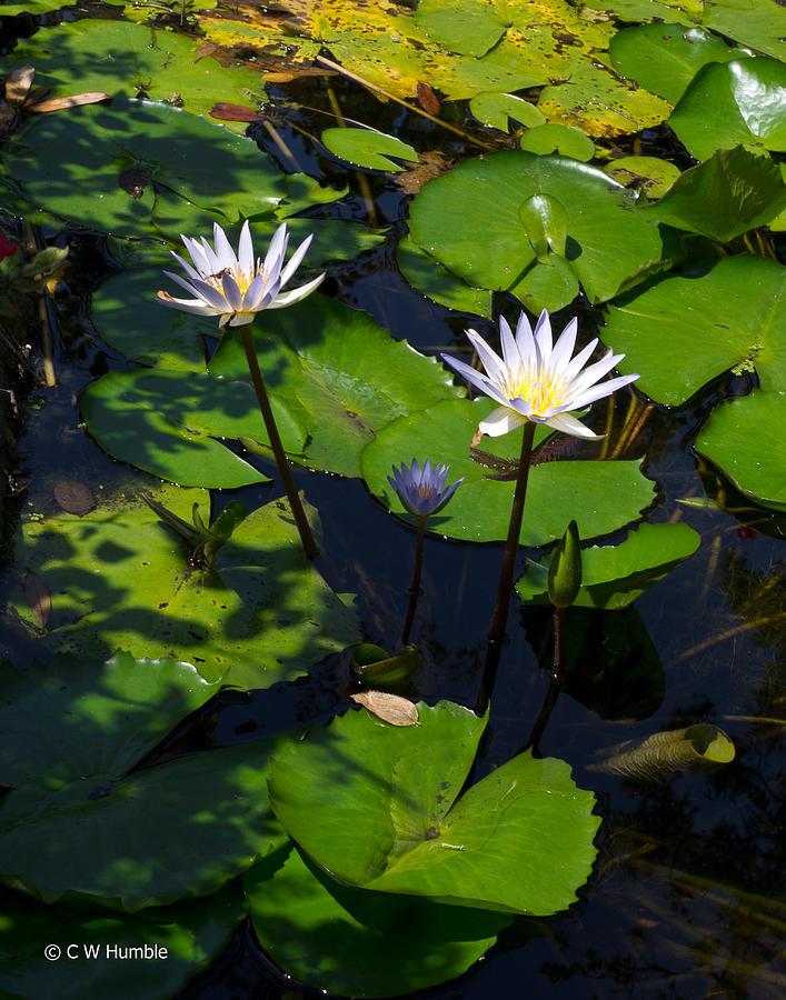 Water Garden I Photograph