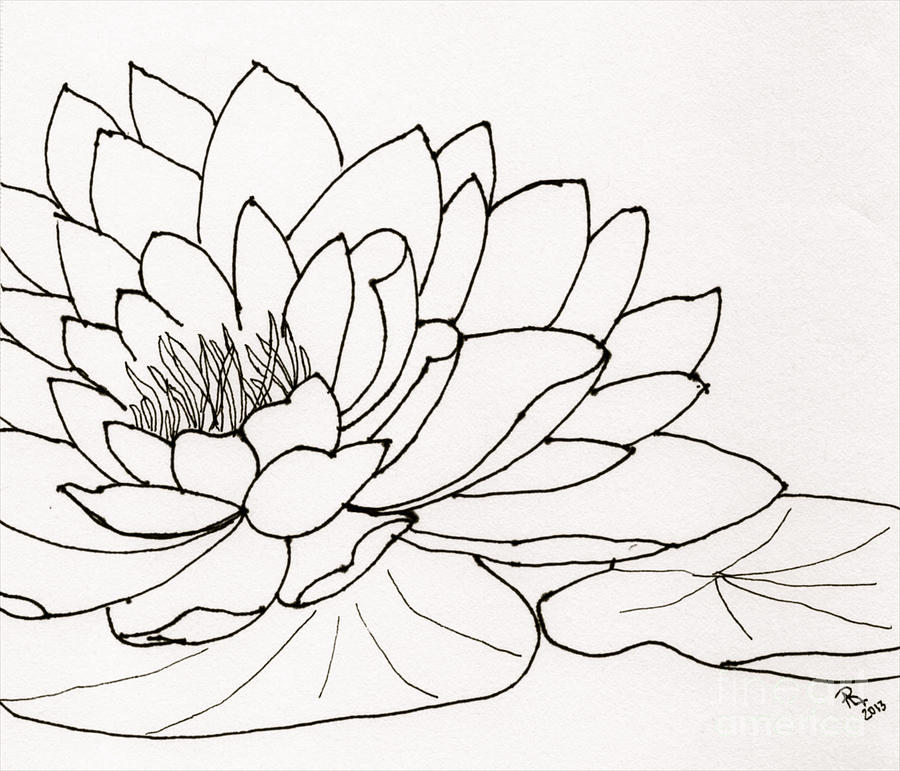 Water Lily Line Drawing Drawing By Anita Lewis