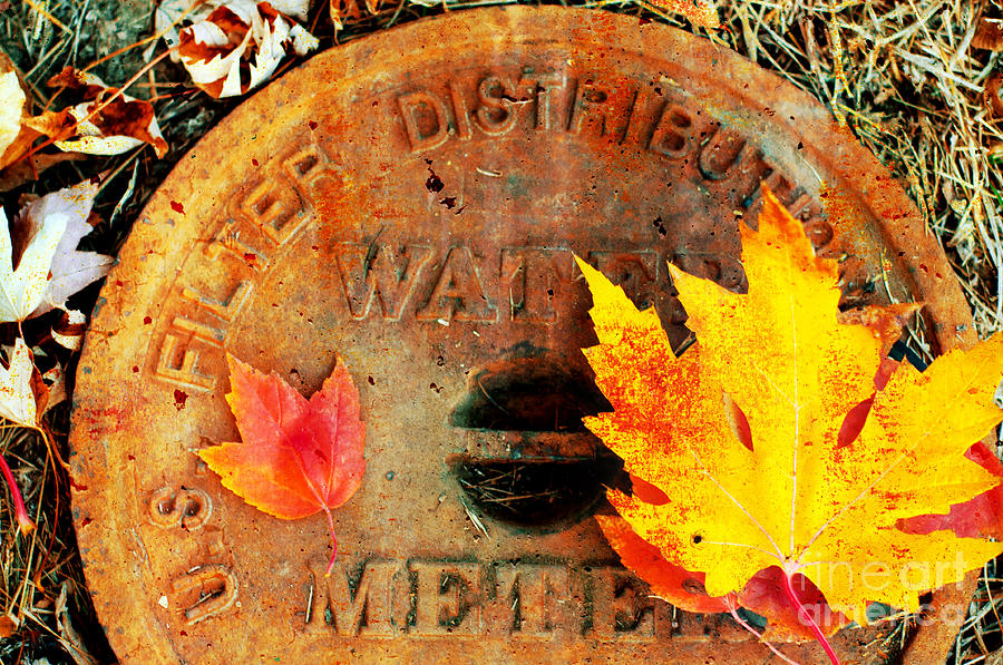 Water Meter Cover With Autumn Leaves Abstract Photograph