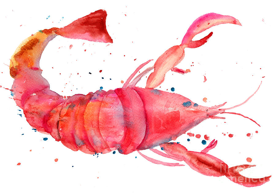 Watercolor Illustration Of Lobster Painting  - Watercolor Illustration Of Lobster Fine Art Print