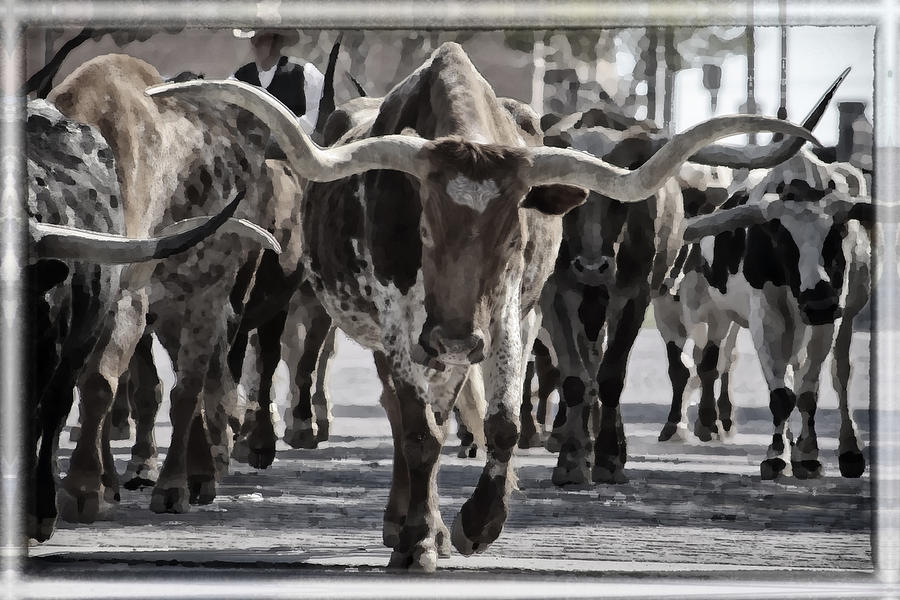 Watercolor Longhorns Photograph