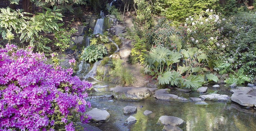 Waterfall At Crystal Springs Rhododendron Garden Photograph By Jpldesigns