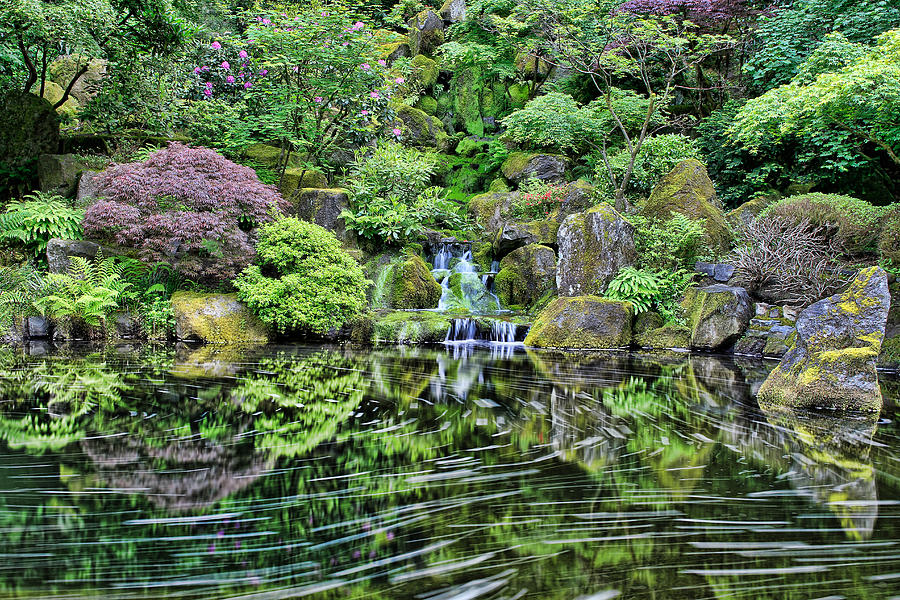 Waterfall At Portland Japanese Garden Photograph by David Gn