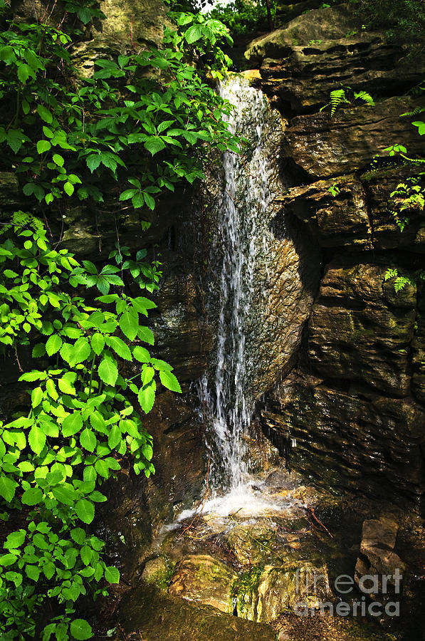 Waterfall In Forest Photograph